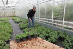 02-perkplanten (5)