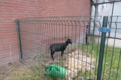03-dieren (5)