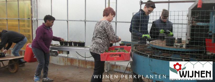 Perkplanten oppotten